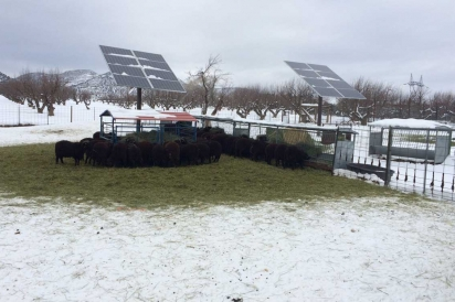 Solar panels keep animals warm in winter