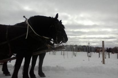 Animal-power at Horse & Hen, Hayden CO