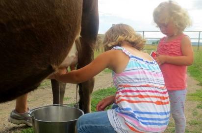 Morning milking at Hayden, CO