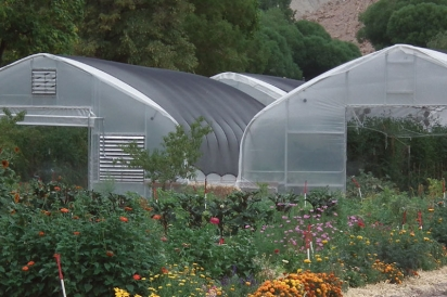 Greenhouses at Early Morning Orchard