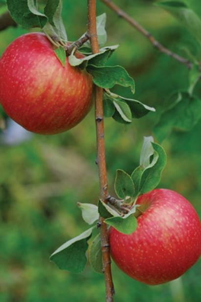 apple landscaping